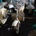 A legszebb robogónak látszó tárgy. Ötvenes évekbeli Lambretta, gyárilag burkolat nélkül, sok-sok aluöntvénnyel